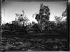 Bulldoser, Sanibel Island, FL, Sanibel Island, FL