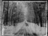 snowy-roadburnettcowi
