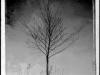tree_w-reeds-9x12