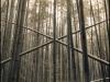 bamboo_grove_1