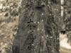 japan1_1