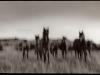 badlandshorse1_1_1