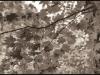 leaves-breitenbushor