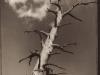 toned-tree_big